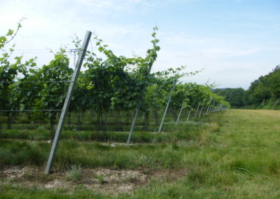 Simpsons Wine Estate - July 17 (46)